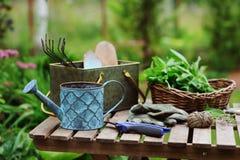 Sélection de la menthe organique fraîche de propre jardin Gardenwork d'été à la ferme images stock