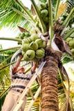 Sélection de la noix de coco avec le papa images stock