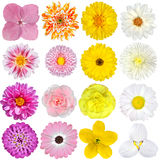 Sélection de rose, d'orange, de jaune et blanc Photos libres de droits