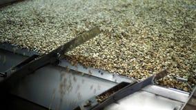 Sélection des grains de café Image stock