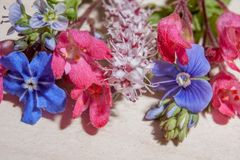 Sélection multicolore de mini fleurs image stock