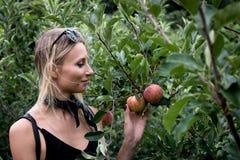 Sélection-votre-propres pommes Photo libre de droits