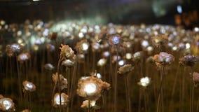 Séoul, Corée ; En juillet 2016 - le point de repère rose de fleur de LED à DDP font dedans Image libre de droits