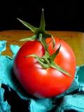 Sépales de combat de tomate Images stock