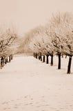 Sépia d'horizontal de l'hiver modifiée la tonalité Images libres de droits