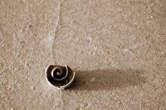 Sépia de coquille en spirale sur le sable texturisé photographie stock libre de droits