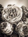 Sépia Rose Photographie stock libre de droits