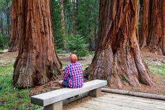 séquoia Photographie stock