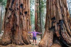 séquoia Photographie stock libre de droits