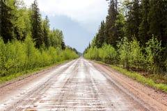 Séquoia droit brumeux Images stock