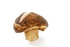 Série 02 de champignons de couche Image libre de droits