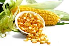 Série 03 de maïs Images stock