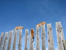 Série #10 do caminhante de Ridge Imagens de Stock Royalty Free
