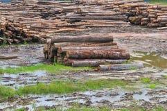 Série 3 de scierie de bois de construction Photo libre de droits
