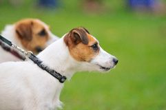 Série 5 da competição do animal de estimação fotos de stock