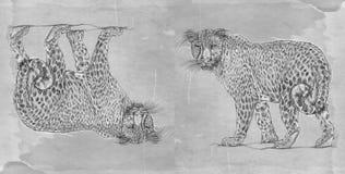 Série animal realística para bandeiras, uma pantera Fotografia de Stock Royalty Free