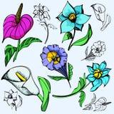 Série d'illustration de fleur Photos libres de droits