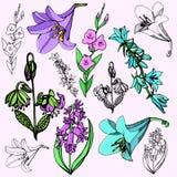 Série d'illustration de fleur illustration de vecteur