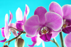 Série d'orchidée images stock