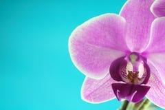 Série d'orchidée photographie stock