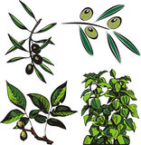 Série da ilustração da fruta Imagem de Stock
