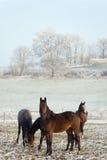 Série de cheval de l'hiver Images stock