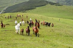 Série de chevaux Images stock