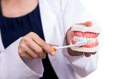 Série de dentista que mostra o método correto de escovar os dentes foto de stock royalty free