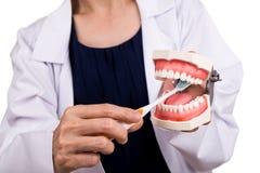 Série de dentista que mostra o método correto de escovar os dentes fotografia de stock royalty free
