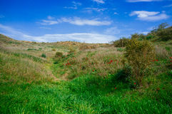 Série de Holyland - deserto em blossom#3 Fotografia de Stock