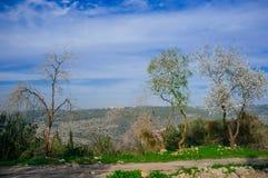 Série de Holyland - montagnes de Judea Image libre de droits