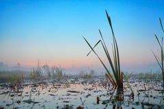 Série de matin brumeux d'automne de paysages Image stock