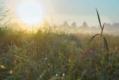 Série de matin brumeux d'automne de paysages Photographie stock
