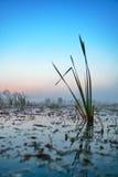 Série de matin brumeux d'automne de paysages Images stock
