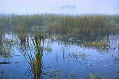 Série de matin brumeux d'automne de paysages Photo libre de droits