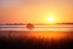 Série de matin brumeux d'automne de paysages Photos libres de droits