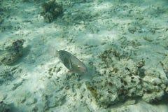 Série de poissons Images libres de droits