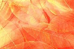 Série de texturas da folha fotos de stock royalty free