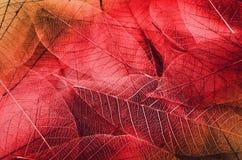 Série de texturas da folha fotografia de stock