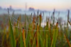 Série du Web le matin brumeux d'automne Images stock