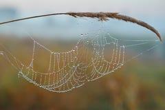 Série du Web le matin brumeux d'automne Image stock