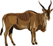 Série ELAND d'antilope Photographie stock