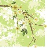 Série florale de branchement illustration libre de droits