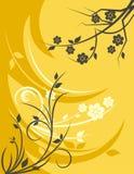 Série florale de fond Photos libres de droits