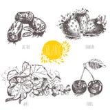 Série - fruits, légumes et épices de vecteur Illustration tirée par la main dans le style de vintage Photographie stock
