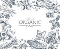Série - fruto, vegetais e especiarias do vetor Mercado da exploração agrícola Produtos naturais orgânico Fotos de Stock