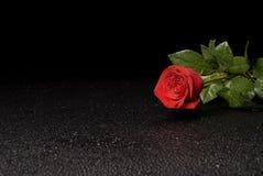 Série humide de Rose Photos libres de droits