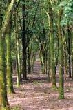 Série III de plantation en caoutchouc photo stock