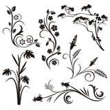 Série japonesa do projeto floral Fotografia de Stock Royalty Free