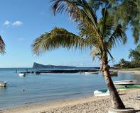 Série tropical imagens de stock royalty free